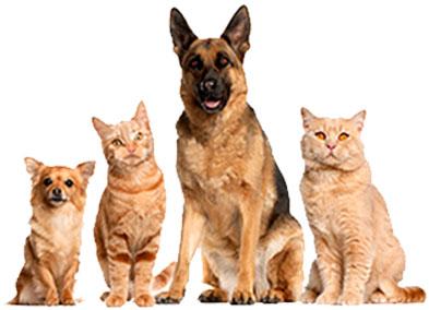 Discover a way to enjoy superior pet nutrition