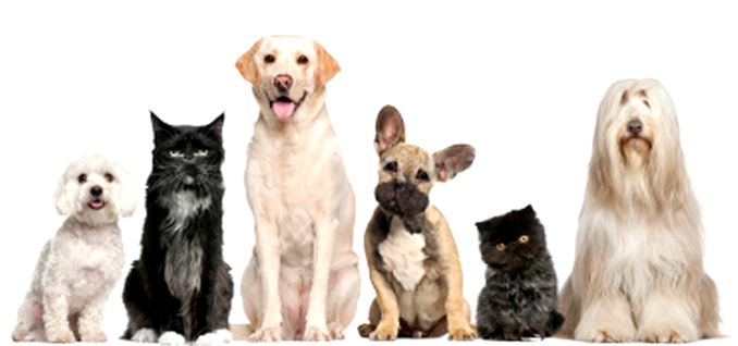 Balance Diet Discover a way to enjoy superior pet nutrition