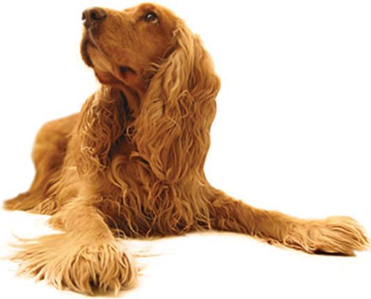 Balance Diet best for dog health