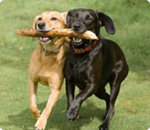 Balance Diet healthy pets diets