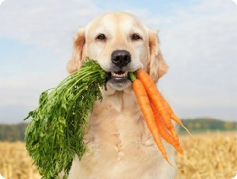 Balance Diet premium dogs food best healthy food for dogs vegies and fruits these are alkaline or acid forming foods