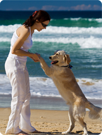 Balance Diet pets love and care