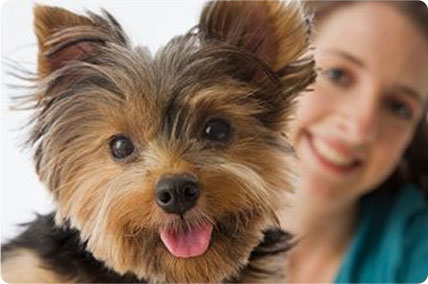Balance diet premium dog foods fresh food for puppies and take best care